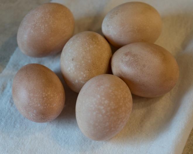 egg dye -02819.jpeg